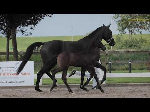 Princess Europe (v. Lord Europe)