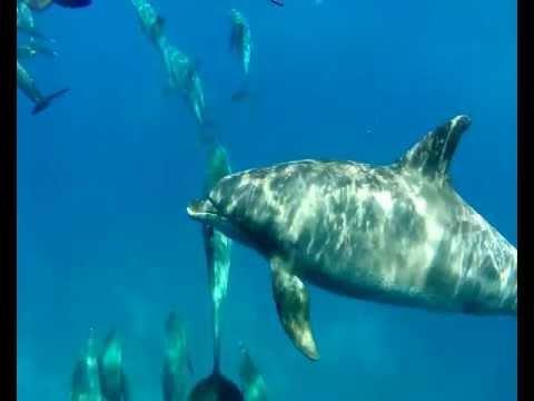 Delfine in Fanous, Fanus West,Hurghada,Ägypten