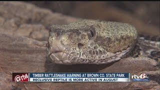 Endangered rattlesnakes spotted in Ind. state parks