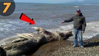 7 สัตว์ประหลาดลึกลับ ที่ใหญ่ที่สุดเท่าที่มนุษย์เคยรู้จัก(สัตว์โลก)