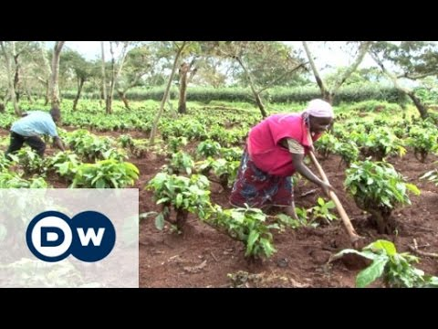The Mubende coffee plantation and the bitter taste of eviction | DW Documentary