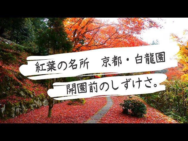 紅葉の名庭・白龍園の開園前の風景