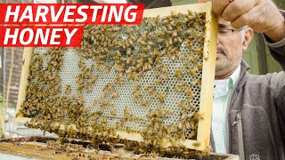 How Khaled Almaghafi Makes Honey From 10 Million Bees in California's Bay Area — First Person thumbnail