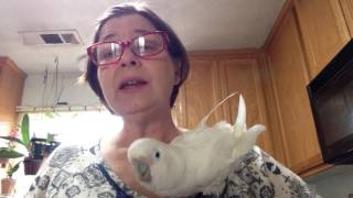 So you want a Cockatoo???