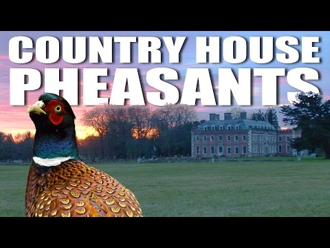 Country House Pheasants: Shaftesbury Estate