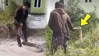 Video Detik-detik King Kobra Ditangkap Kurir JNE di Perumahan, Warga Mengaku Lihat Ada 6 Ekor Ular