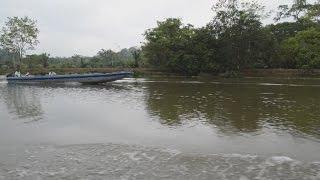 CORN - Declaran alerta en la Reserva Biológica Indio Maíz en Nicaragua