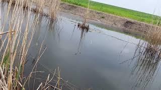 Рыбалка в китае на рисовых полях