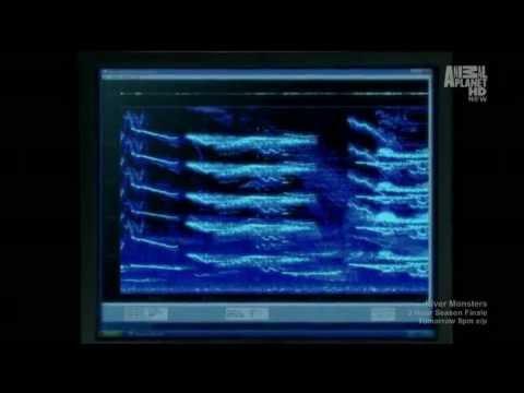 bộ phim trên kênh discovery nói về người cá.hôm trước mình coi trên tivi nên có vietsub.và kênh discovery là kênh khám phá uy tín hàng đầu thế