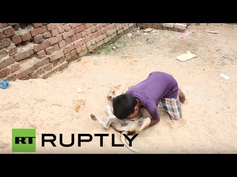 Download India: Meet Mohit, the 10-yr-old boy who feeds on dog milk HD Mp4 3GP Video and MP3