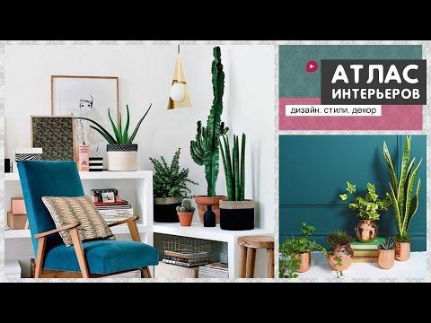 Комнатные цветы и растения в интерьере. Идеи как украсить квартиру живыми цветами