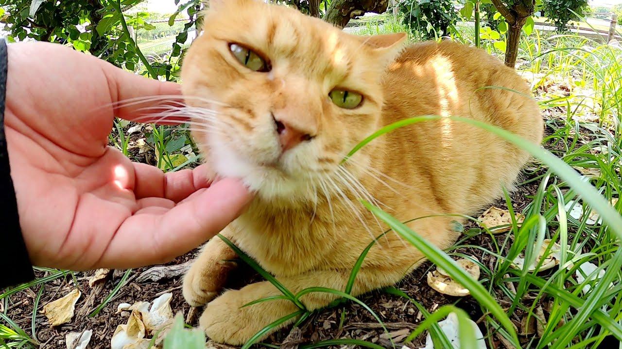 日光を浴びたい茶トラ猫、日陰で涼みたいクリーム猫