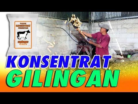 Pembuatan Konsentrat Gilingan (Pakan Ternak)