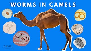 Worms in Camels (What You Need To Know)