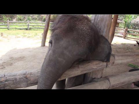Adorable Baby Elephant Tries to Wake a Sleeping Dog
