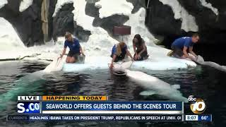 SeaWorld offers guests behind-the-scenes tour