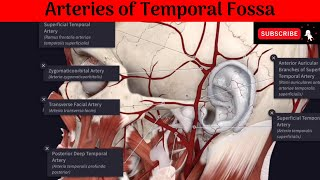 Arteries of Temporal Fossa | Deep Temporal Arteries | Superficial Temporal Artery & Its branches