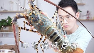 """The extremely rare Chinese splendid lobster, the ancients regarded as """"Shrimp"""""""