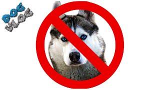 20 ПРИЧИН НЕ ЗАВОДИТЬ ХАСКИ. Говорящая собака. Хаски Бандит