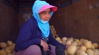 Дешевые местные арбузы и дыни появились на рынках Шымкента