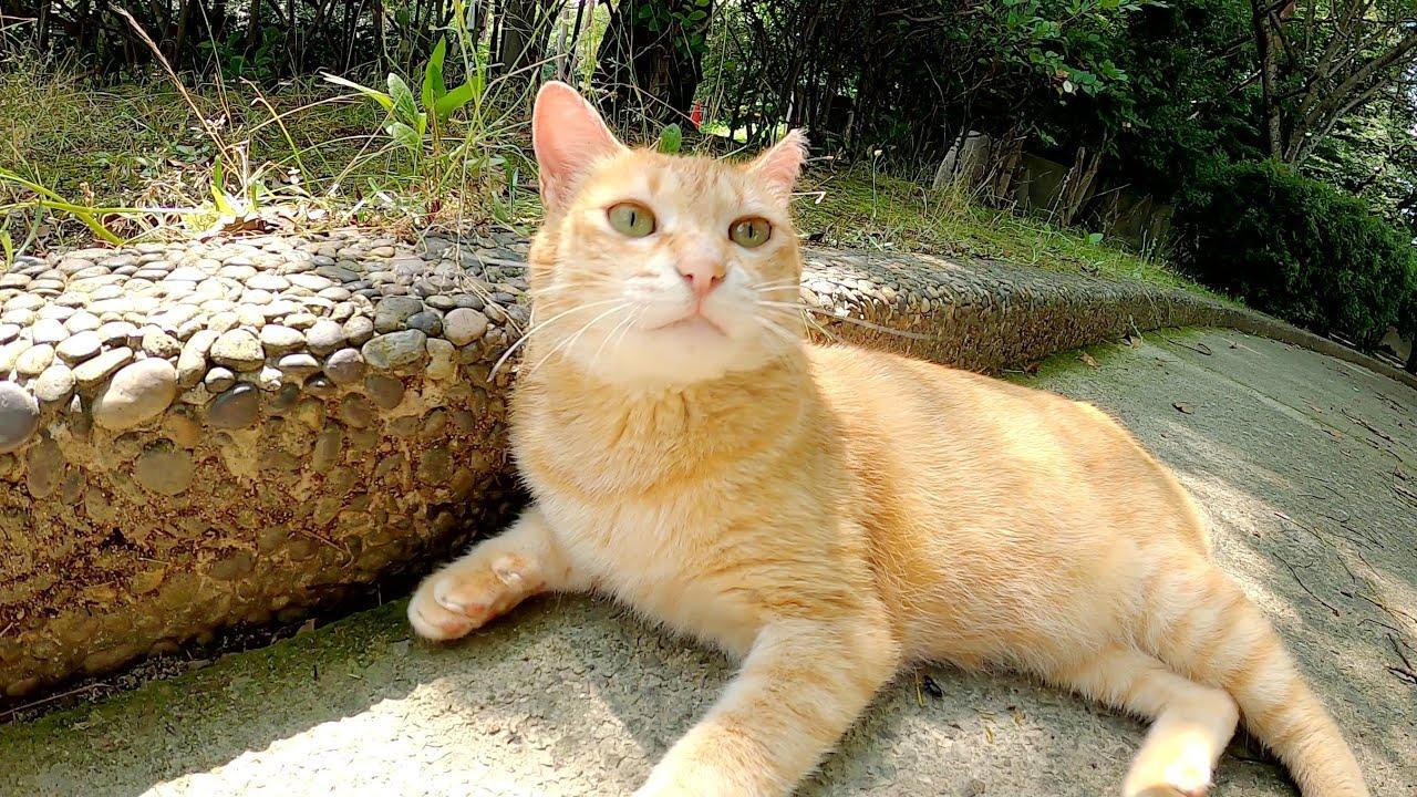 後ろ脚を放り出してくつろぐ猫、振り向くとかなりの美猫だった