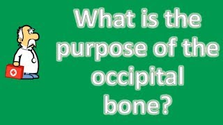 What is the purpose of the occipital bone ? | Health Channel