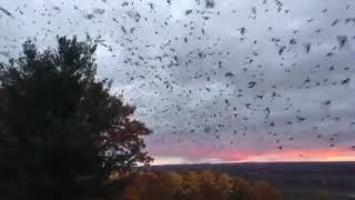 The Most Incredible Migration