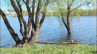 Тело, пропавшего в октябре молодого человека, было обнаружено в Волхове
