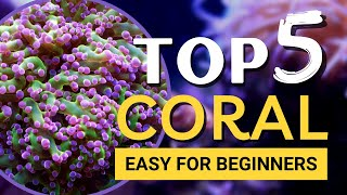 TOP 5 Corals for Beginners