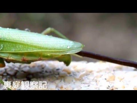 Легендарные пластилиновые ноги паразиты