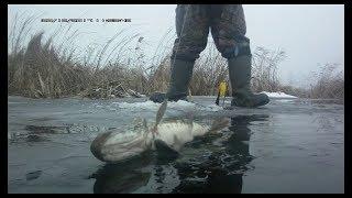 Щука на жерлицу отчет о рыбалке