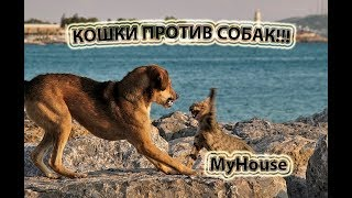 КОШКИ ПРОТИВ СОБАК!!! ВЕСЕЛАЯ НАРЕЗКА!!! MyHouse #159 ЯНВАРЬ 2018