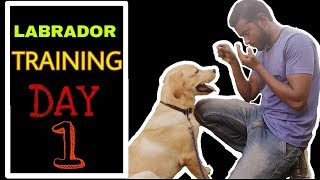 Labrador Training - Day 1 || Best way to train your dog 2020 Hindi