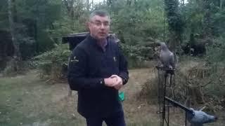 Astuces sur glaneur pour pigeon.