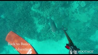 Spearfishing: Who is hunting who? [SHARK ATTACK]
