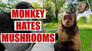 Monkey HATES Mushrooms! Funny