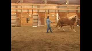 Problems When Teaching A Horse To Lunge With Holistic Horse Trainer Missy Wryn