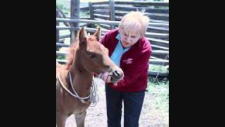 Handling & Haltering Your Foal Without Trauma : Using the Tellington TTouch Method
