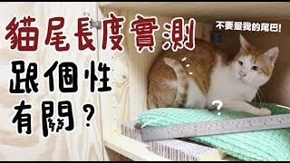 【黃阿瑪的後宮生活】貓尾長度實測,跟個性有關?