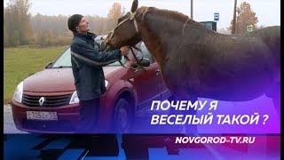 В Холмской деревне Новички живет веселый конь Яхонт