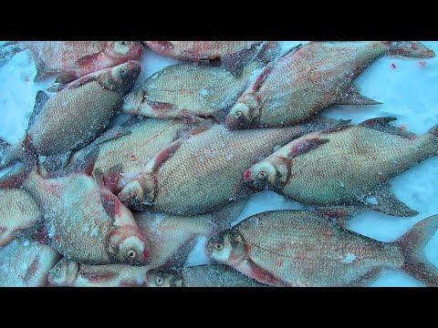 ВОТ ЭТО ДУПЛЕТЫ! КОМБАЙН ПОПАЛ ТОЧНО В РЫБУ! Рыбалка удалась!!