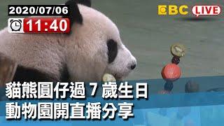 【東森大直播】貓熊圓仔過7歲生日 動物開直播分享