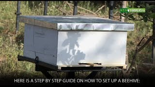 How to set up a Beehive and start Beekeeping
