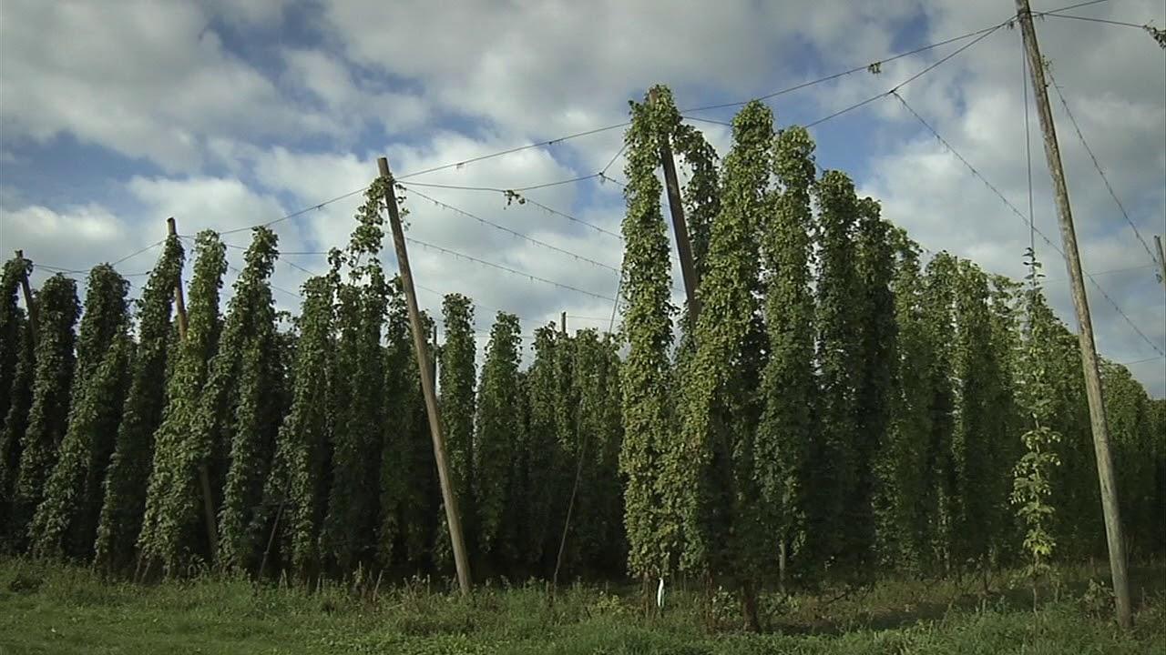 Wie entsteht unser feines Bier?