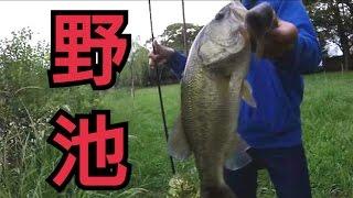 野池でバス釣り!いい感じの野池教えてもらいました。