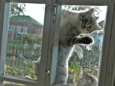 Чего ждать, если кошка сама пришла к вам в дом: приметы и суеверия