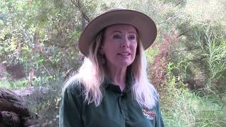 Numbat Keeper Talk | Perth Zoo