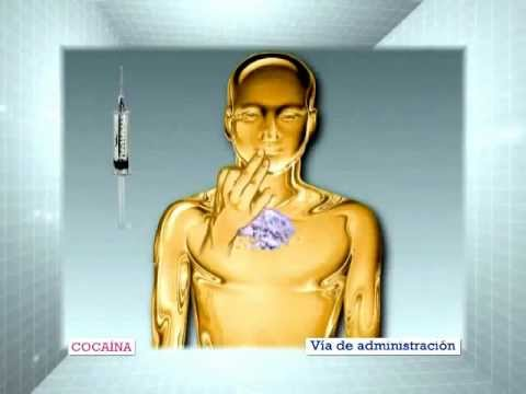 Efecto de la insulina sobre el metabolismo.