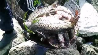 Рыбалка в махачкале на березке