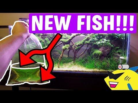 ADDING NEW PURPLE FISH TO AQUARIUM!